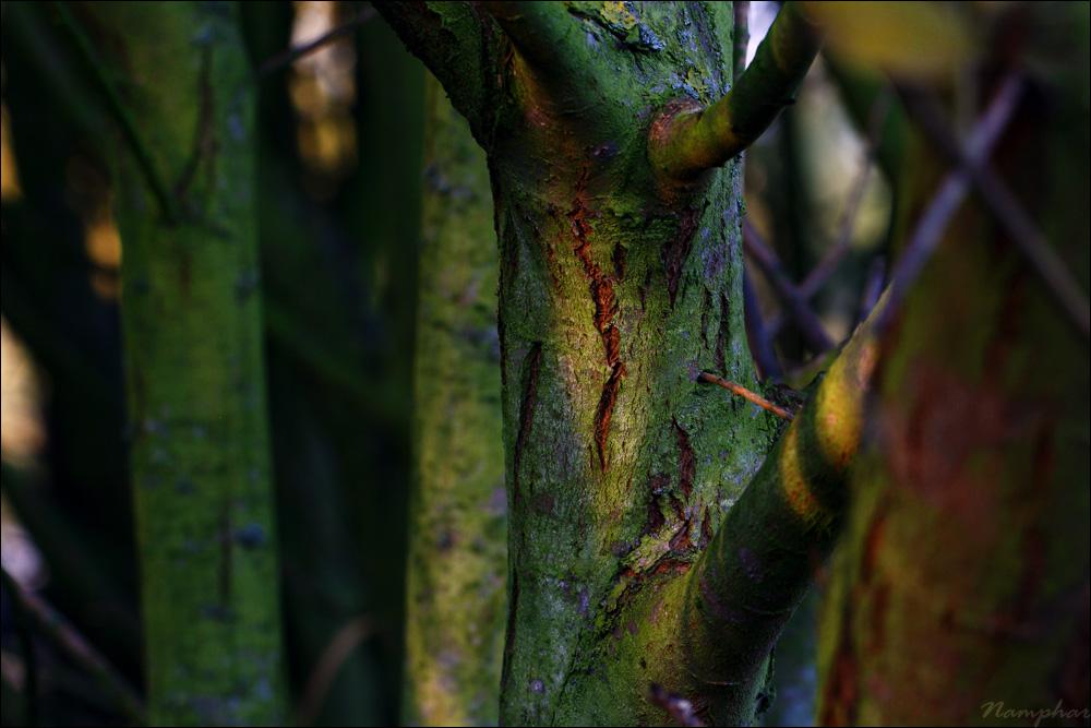 Promenons-nous dans les bois dans Hors albums 20110927175310_macro_008
