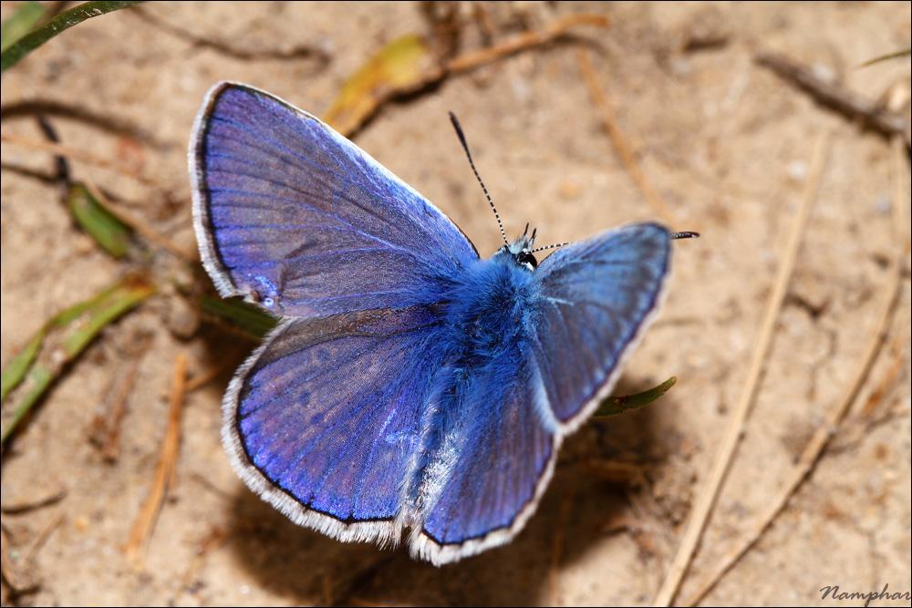 Douceur bleu (Namphar's Corner)
